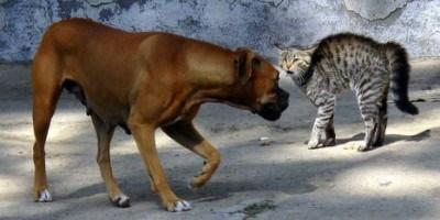 Pantangan Memakan Daging Anjing Dan Kucing Dalam Hindu