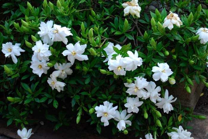 Bunga Yang Tidak Boleh Dipakai Sembahyang Dalam Hindu