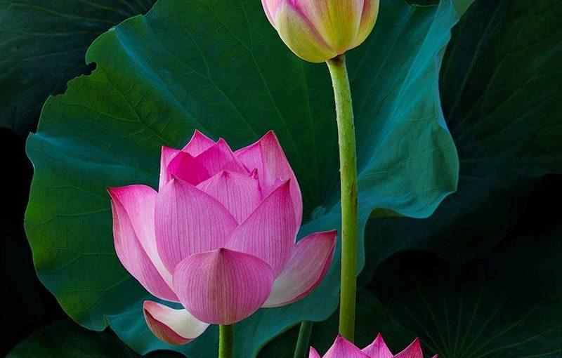 Bunga Indah Di Dalam